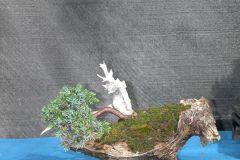 VSB-Ausstellung-Schinznach-2006-018