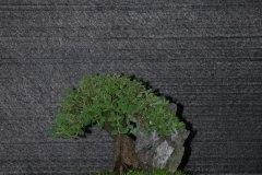 VSB-Ausstellung-Schinznach-2006-044
